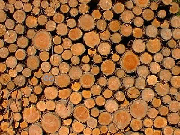 Le sapin de Noël peut-il être recyclé en bois de chauffage ?