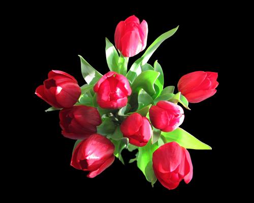 Tous les événements ont leurs fleurs attitrées