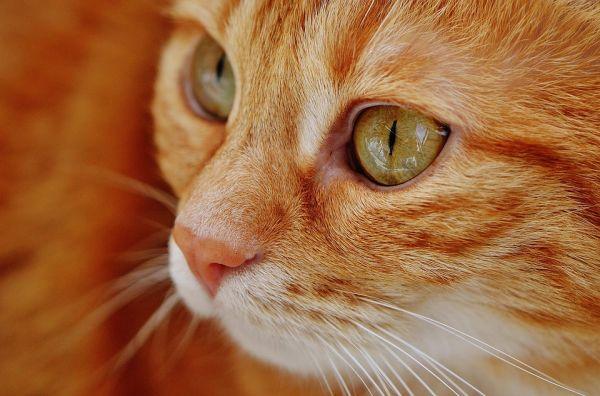 Quelques règles pour bien élever un chat